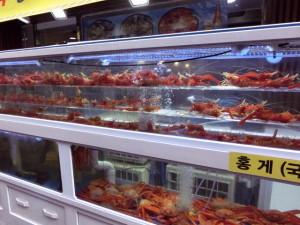 海老&蟹の専門店 海が眼の前の場所柄、活きがいいですよ。