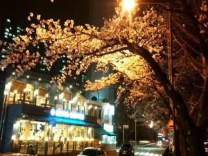 釜山 ・温泉場カフェ・ストリートの夜桜